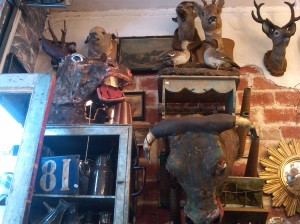 French-country-montmarte-taxidermy